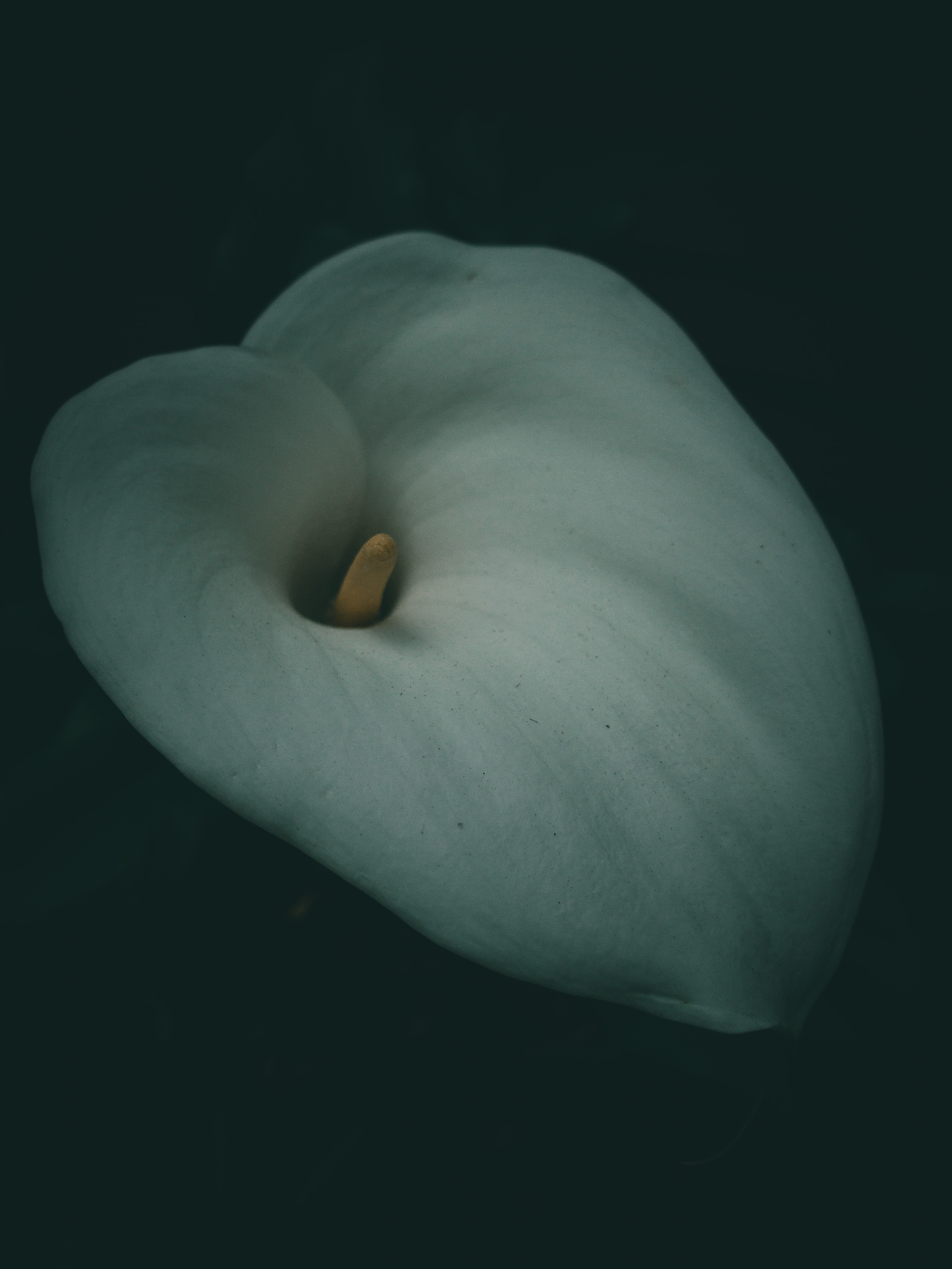 Image of a flower