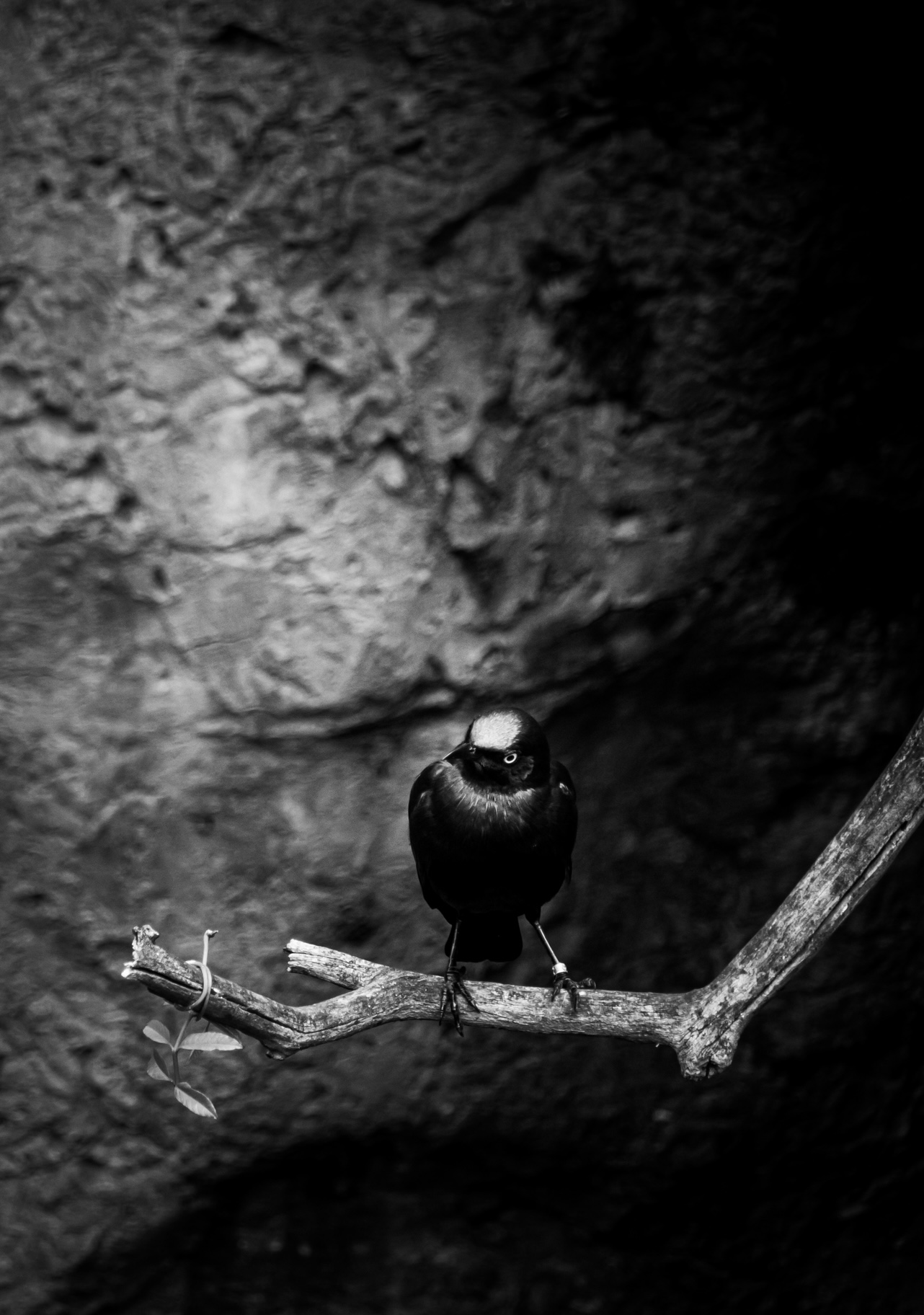 Black and white photo of a bird