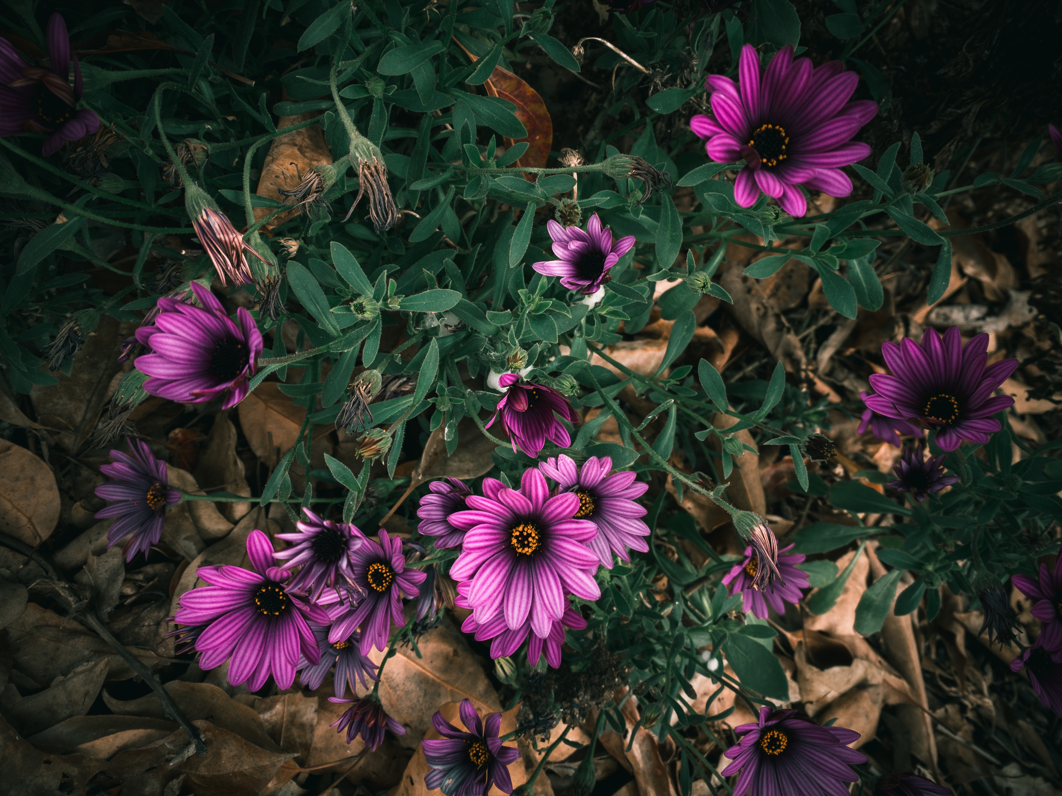 moody image of flowers
